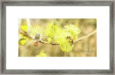 Wild Bee Spring Framed Print