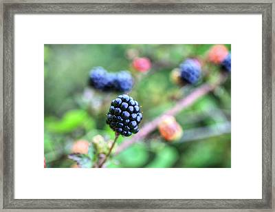Wild Berries  Framed Print by JC Findley