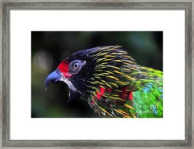 Wild Bird Framed Print by David Lee Thompson