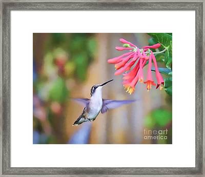Wild Birds - Hummingbird Art Framed Print