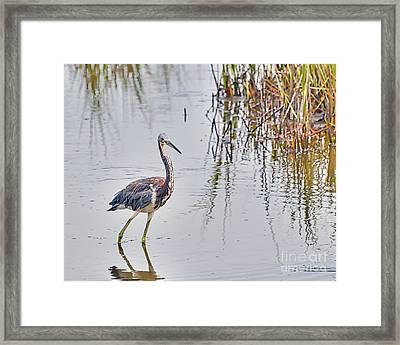 Wild Birds - Tricolored Heron Framed Print