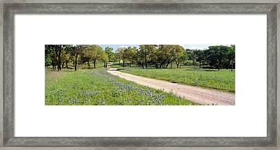 Wild Blue Bonnets, Spring In Rural Texas Framed Print