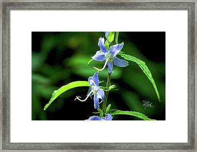 Wild Blue Flowers Framed Print
