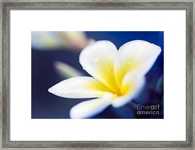 Wild Blue Morning Framed Print by Sharon Mau