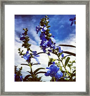 Framed Print featuring the digital art Wild Blue Sage  by Shelli Fitzpatrick