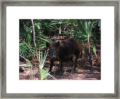 Wild Boar I Framed Print
