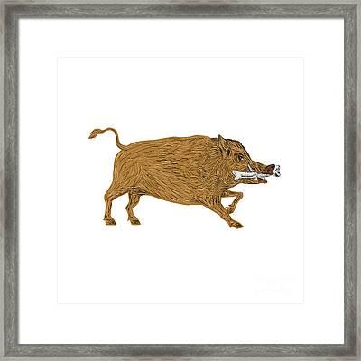 Wild Boar Razorback Bone In Mouth Walking Retro Framed Print