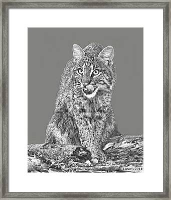 Wild Bobcat Framed Print by Larry Linton