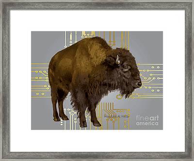 The American Buffalo Framed Print
