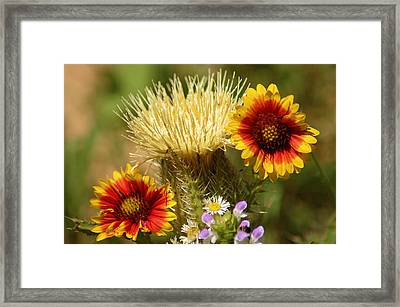 Wild But Free Framed Print by Lori Mellen-Pagliaro