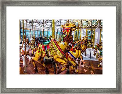 Wild Camel Carrousel Ride Framed Print by Garry Gay