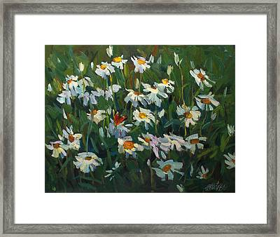 Wild Camomile Framed Print