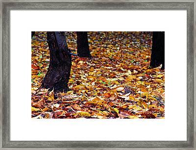 Wild Cherry Leaves Framed Print by Thomas R Fletcher