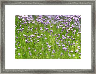 Framed Print featuring the photograph Wild Chives by Chevy Fleet