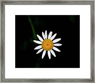 Framed Print featuring the digital art Wild Daisy by Chris Flees