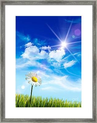 Wild Daisy In The Grass Against Bleu Sky Framed Print by Sandra Cunningham