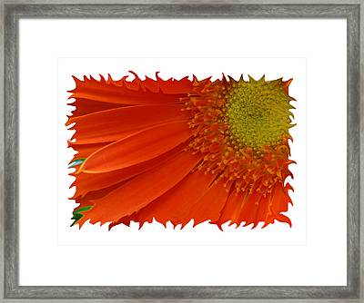 Framed Print featuring the photograph Wild Daisy by Shari Jardina