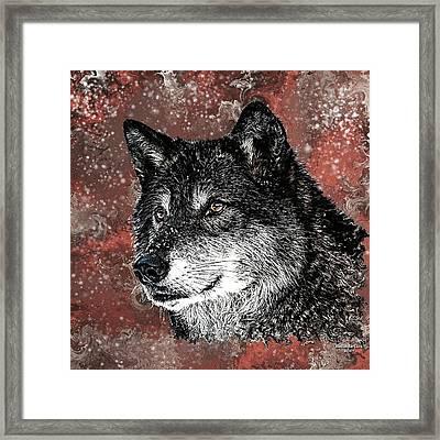 Wild Dark Wolf Framed Print