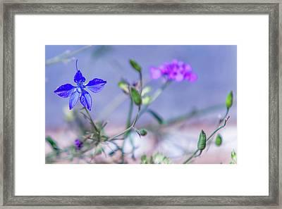 Wild Delphinium Flower Framed Print