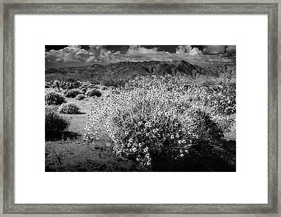 Framed Print featuring the photograph Wild Desert Flowers Blooming In Black And White In The Anza-borrego Desert State Park by Randall Nyhof