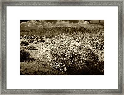 Framed Print featuring the photograph Wild Desert Flowers Blooming In Sepia Tone  by Randall Nyhof