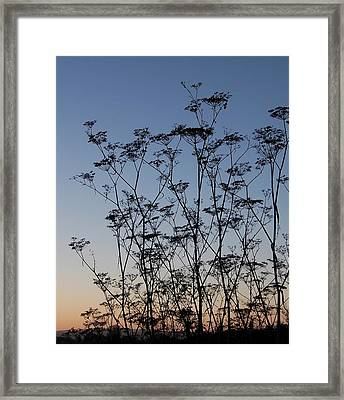 Wild Dill Silhouette Framed Print by Jean Booth