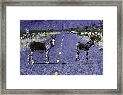 Wild Donkeys On Road To Oatman Framed Print
