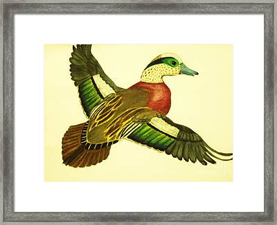 Wild Duck Framed Print by Jamey Balester