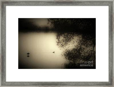 Wild Duckpond Framed Print by Ron Evans