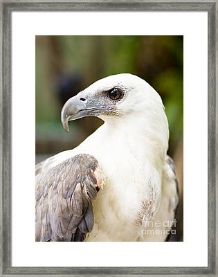 Framed Print featuring the photograph Wild Eagle by Jorgo Photography - Wall Art Gallery