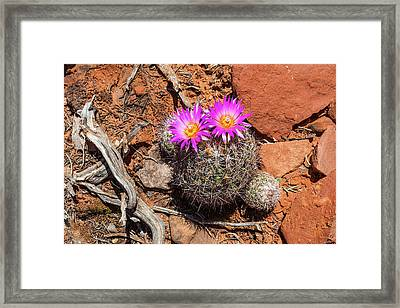 Wild Eyed Cactus Framed Print