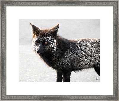 Wild Eyes Framed Print by David Lee Thompson