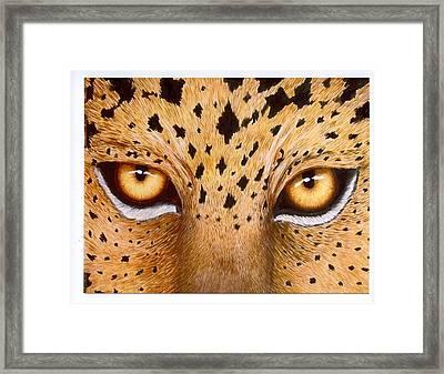 Wild Eyes Framed Print by Lorraine Foster