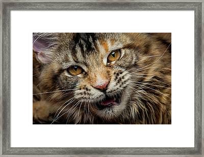 Framed Print featuring the photograph Wild Face by Robert Sijka