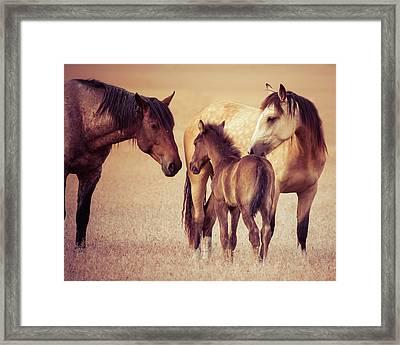 Wild Family Framed Print by Mary Hone