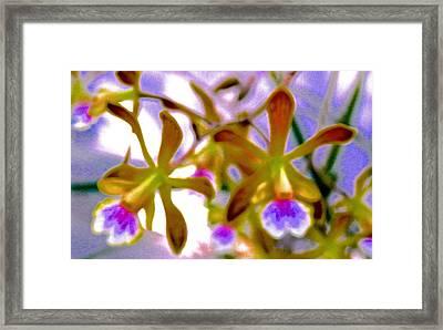 Wild Florida Orchids Framed Print