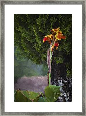 Wild Flower  ... Framed Print