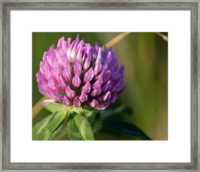 Wild Flower Bloom  Framed Print