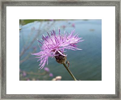 Framed Print featuring the photograph Wild Flower By The Lake by Martha Ayotte