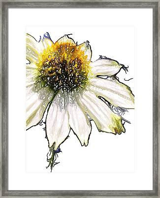 Framed Print featuring the photograph Wild Flower Five  by Heidi Smith