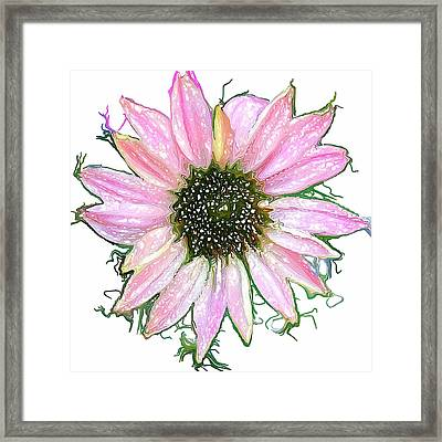 Framed Print featuring the photograph Wild Flower Four by Heidi Smith