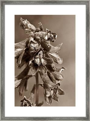 Wild Flower In Sepia Framed Print
