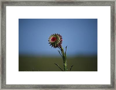 Wild Flower Framed Print by John Roncinske