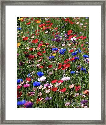 Wild Flower Meadow 2 Framed Print