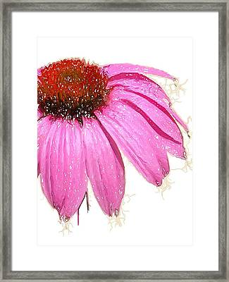 Framed Print featuring the photograph Wild Flower One  by Heidi Smith