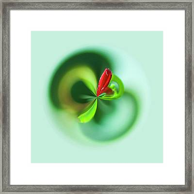 Framed Print featuring the photograph Wild Flower Orb by Bill Barber