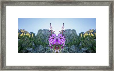 Wild Flower Reflection Framed Print by Pelo Blanco Photo