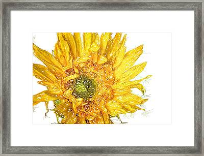 Framed Print featuring the photograph  Wild Flower Two  by Heidi Smith