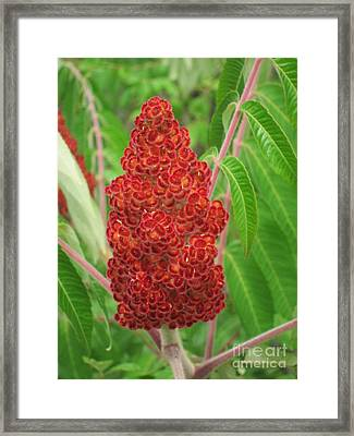 Wild Flowers 11 Framed Print