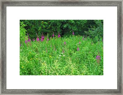 Wild Flowers And Shrubs In Vogelsberg Framed Print